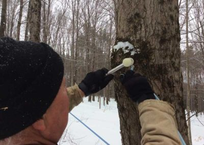 tree-tapping